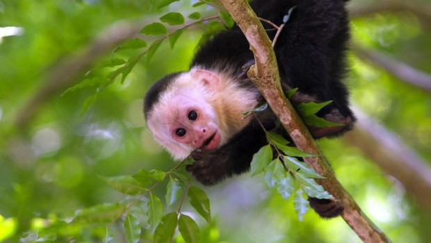 Capuchin monkeys are among the sights that Ty Wivell, national sales manager at DayMen, has enjoyed.