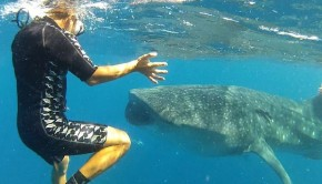 Gabriel López Silva comes face to face with whale sharks near Cancun, Mexico.