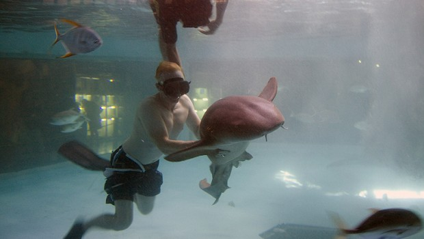 Swimming with sharks at the Mazatlan aquarium in Mexico is just one exotic travel adventure.