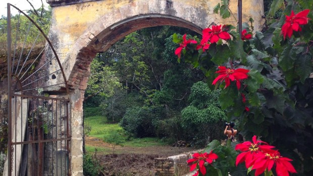 Flowers and entry arch at Hacienda Jalisco, a historic hotel in Mexico.