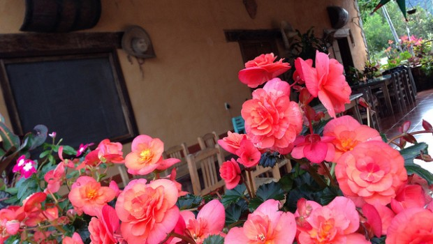Beautiful flowers welcome guests to a raicilla distilery near Puerto Vallarta, Mexico.