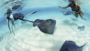 Stingrays at Xcaret, near Occidental Grand Xcaret hotel in Mexico.