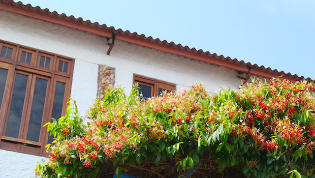 Flowers make Taboga island especially beautiful.