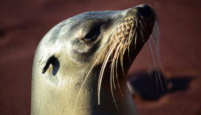 A sea lion on the Galapagos Islands. PHOTO:          p.j.k. via VisualHunt.com /  CC BY