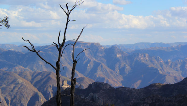 Mexico's Copper Canyon is actually a group of canyons.