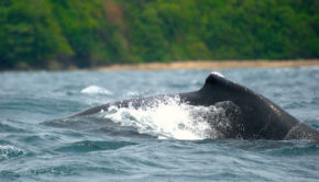 Humpback whale watching in Chocó, Colombia. PHOTO: Aztlek via Visual hunt